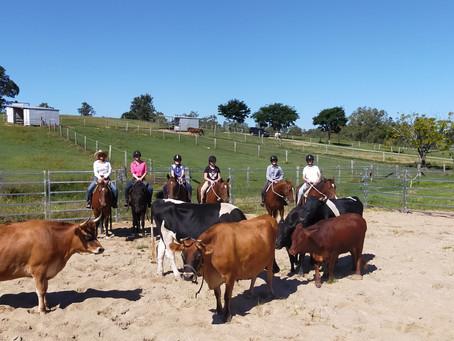 Developing Rider's Camp - Cattle Work!