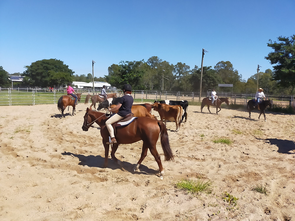 A group of riders learning cattle work at Anstead Acres.