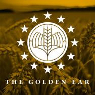 Branding & Logo Design