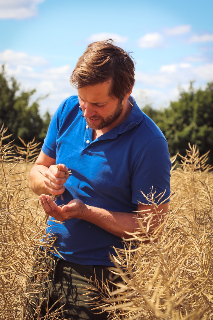 Tom Martin in Rapeseed Harvest_Farmers W