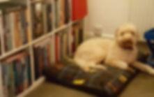 Boo Boo on cookbook guard 🤣.jpg