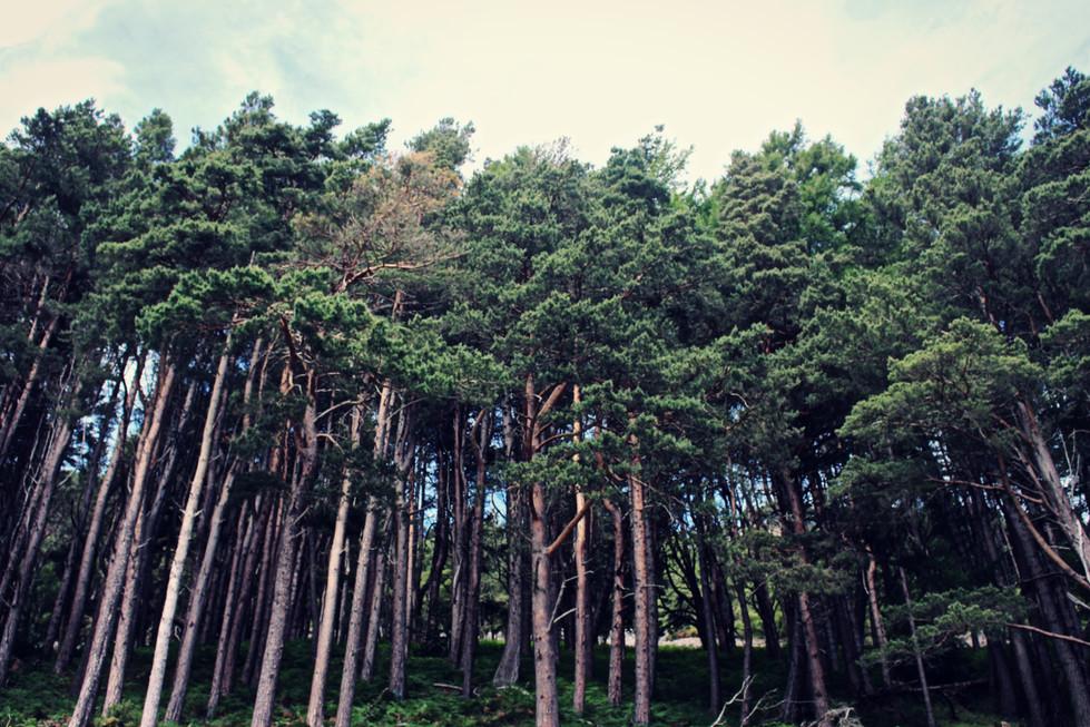 Tumbling Tree Cluster
