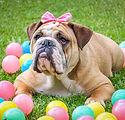 Doggie Easter Egg Hunts