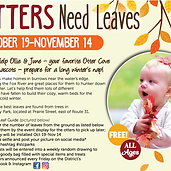 OUTDOOR | STC Parks | Otters Need Leaves
