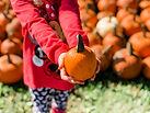 Pumpkin Farms