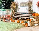 Fall Events + Festivals