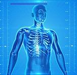 human-skeleton-163715_640.jpg