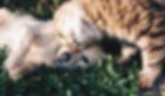 PetSpecialtyShops.jpg