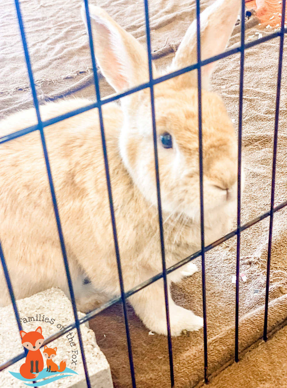Hickory Knolls Discovery Center, St. Charles, St. Charles Park District, Nature, Bunny