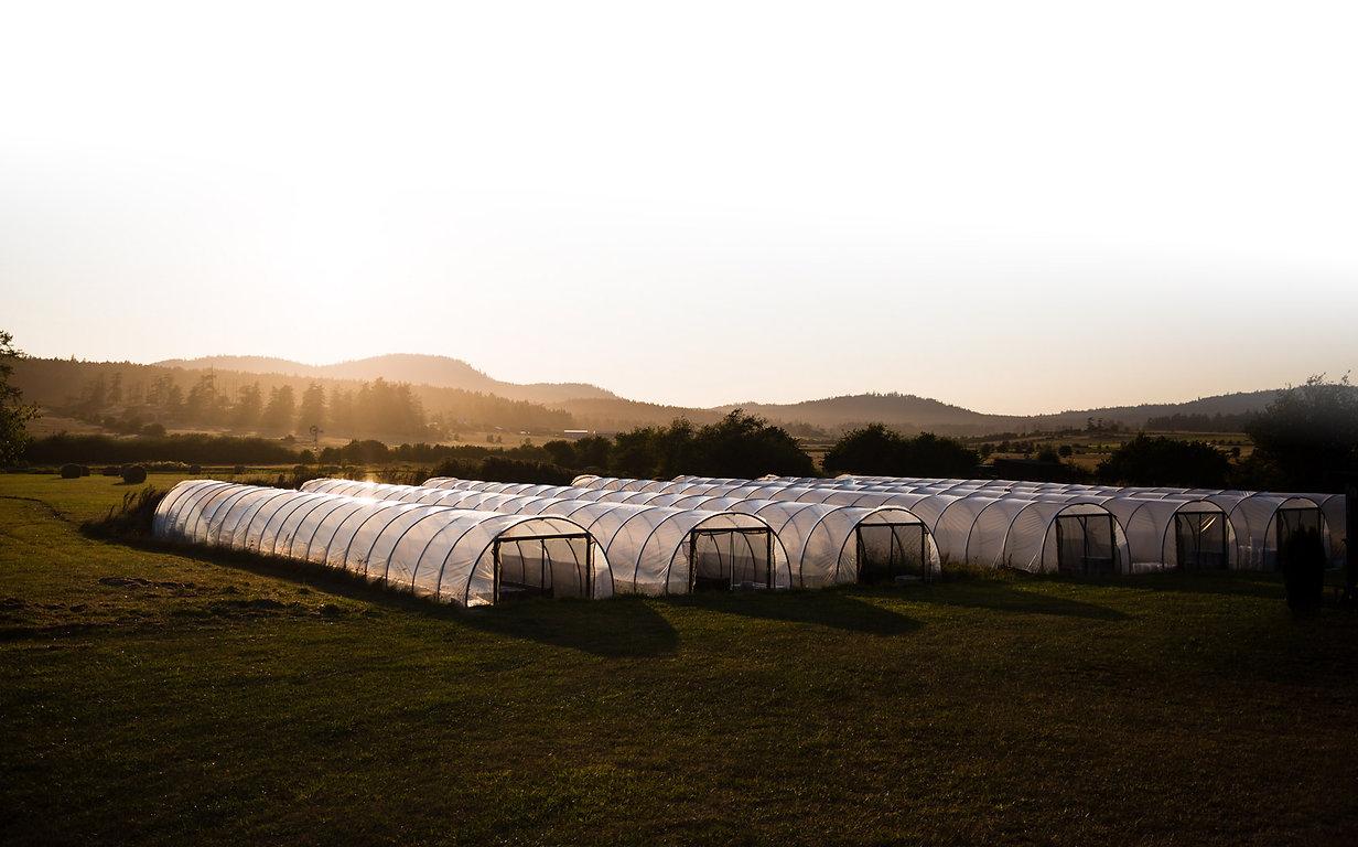 Greenhouses_Gradient.jpg
