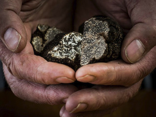 LIVING THE TRUFFLE EXPERIENCE Truffle hunting!