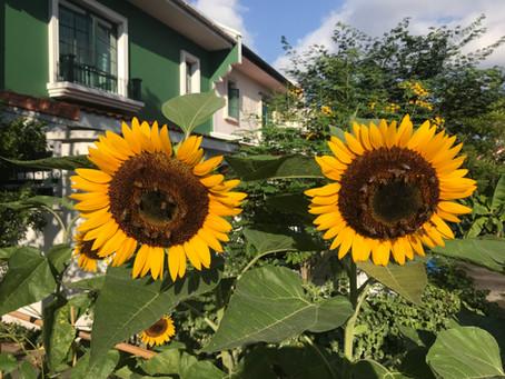 Edible Flowers & Ravioli