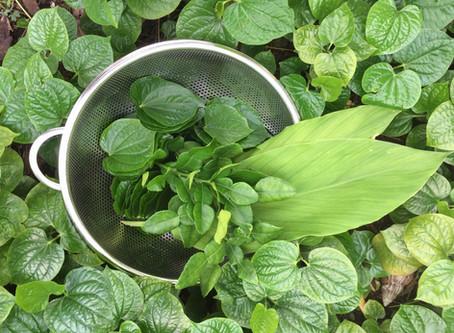 Local Herbs & Nasi Ulam