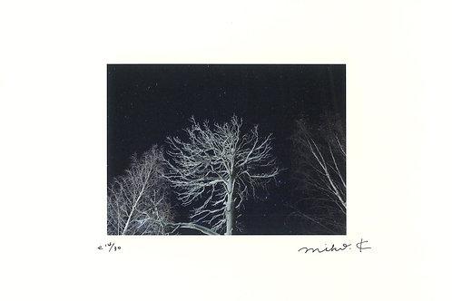 かくたみほさんポスター(A4)冬のラップランド、氷の粒が見える木々。