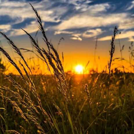 Enabling Crop Analytics at Scale