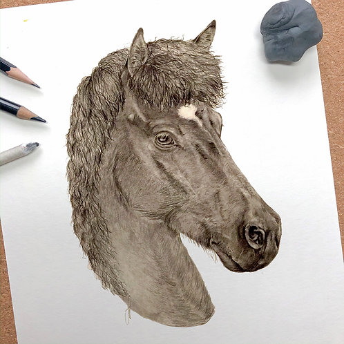 Tierportrait Bleistift