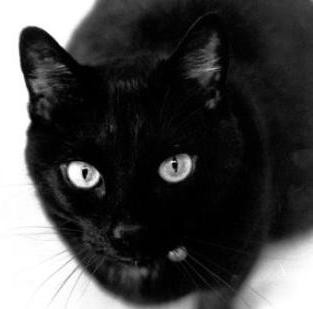 Black Cat Appreciation Day: Purrfect!