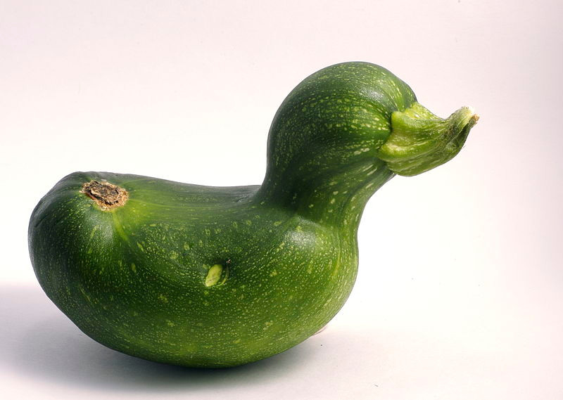 National Zucchini Day, zucchini