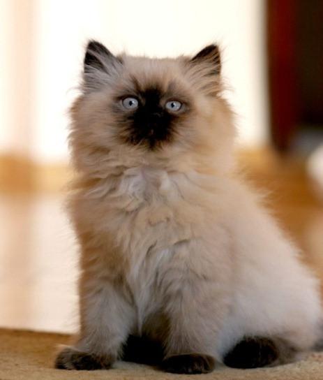 KittenMARIEJEANNEIliescuStock.jpg