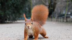 Squirrel Appreciation Day: Nutty squirrel facts