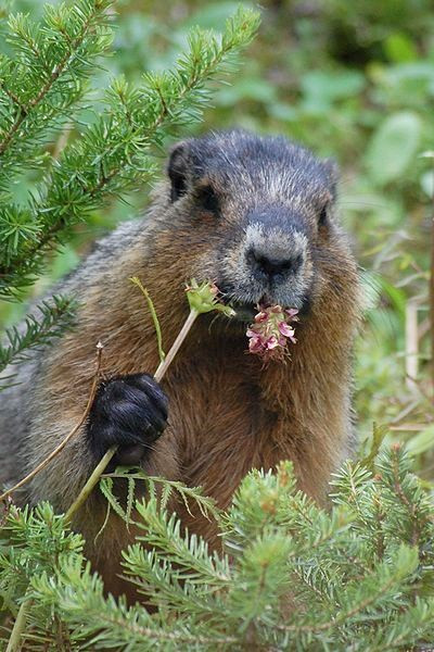 Groundhog Day:  Did He or Didn't He?