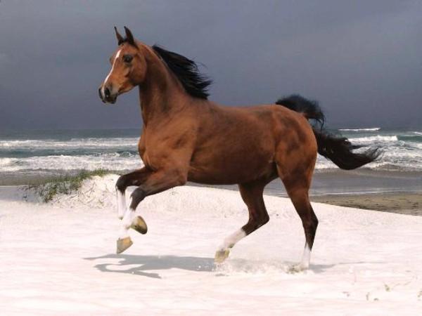 I Love Horses Day
