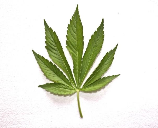 MarijuanaGerhardTaatgenJrStock.jpg