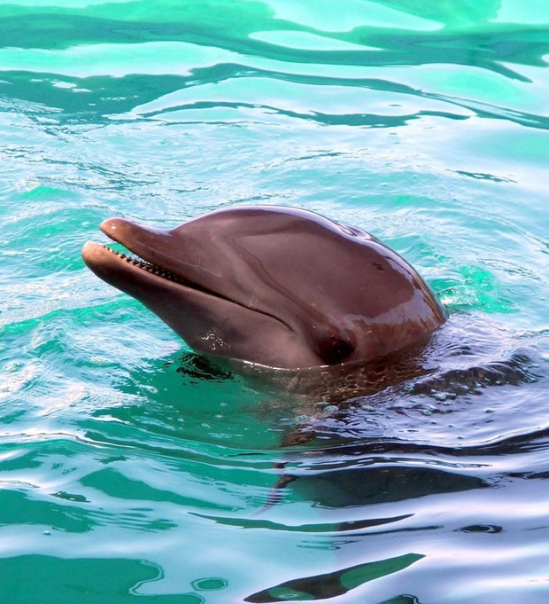 National Dolphin Day:  Shining the light on the plight of the dolphin