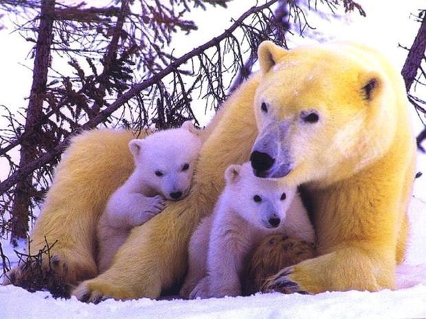 International Polar Bear Day: The plight of the Polar Bear