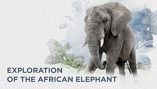 07 elephant sanctuary website.jpg