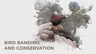 11 birdringing website.jpg
