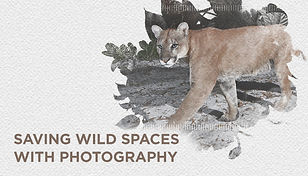 04 camera trap website 2.jpg