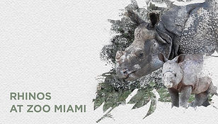 08 miami zoo website.jpg