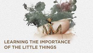 13 bugs website.jpg