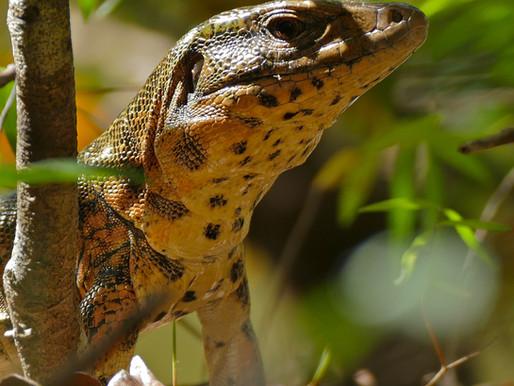 Florida Invasive Species