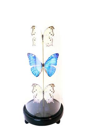 Vlinders in stolp - parelmoer blauw
