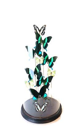 Groene vlinders in stolp