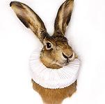konijn wit.jpg