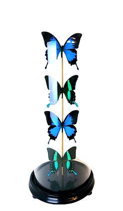 Drops - Vlinders in stolp