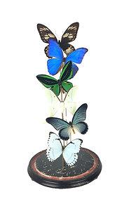 Special mix - vlinders in antieke stolp