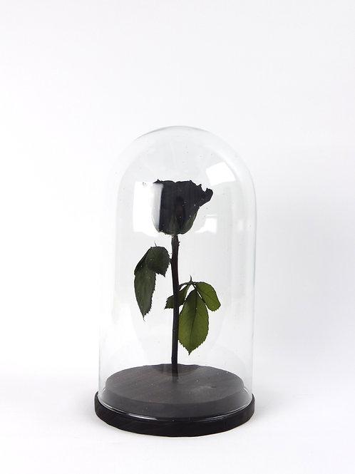 Roos klein (Echte roos die blijft!)