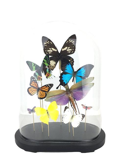 vlinders in stolp, vlinder
