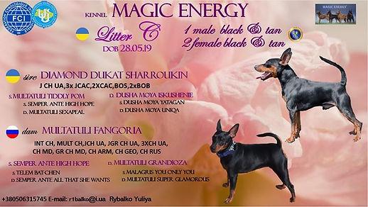 Питомник цвергпинчеров MAGIC ENERGY