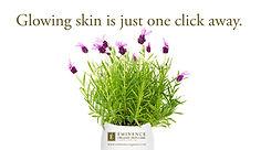 image2-lavender-850-x-490.jpg