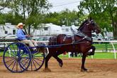 Cody Woodbury cart.jpg
