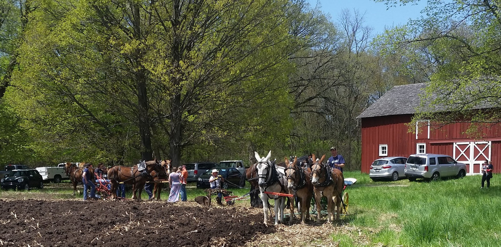 mules and group.jpg