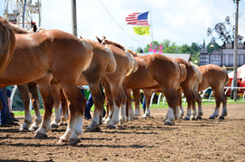 horse butts.jpg