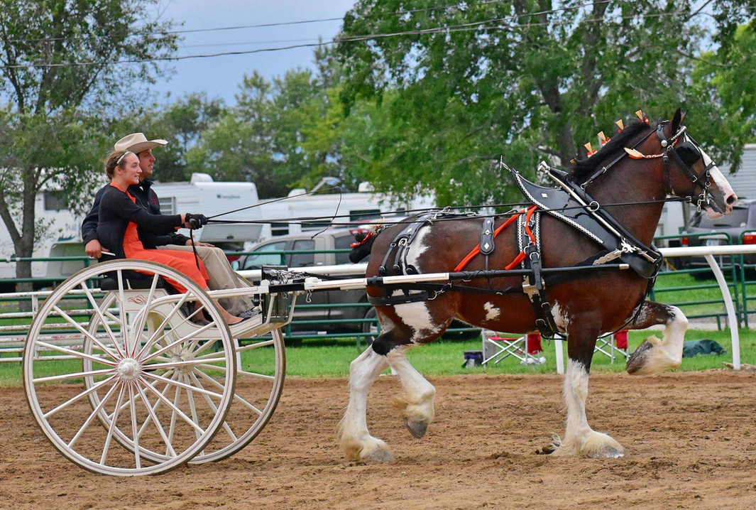 Berkshire Clydesdales youth cart.jpg