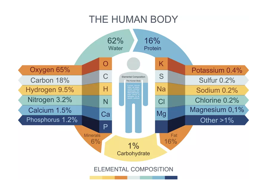 human-body-infographics (rect).png