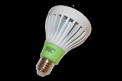 Orel Bulb